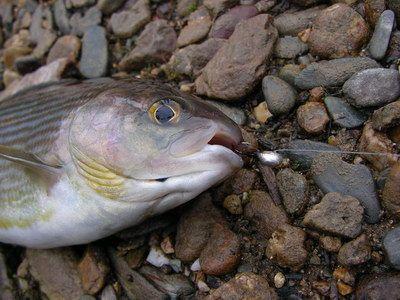клюет ли рыба после электроудочки